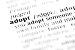 adopt (the dictionary project, macro shots, shallow D.O.F.)
